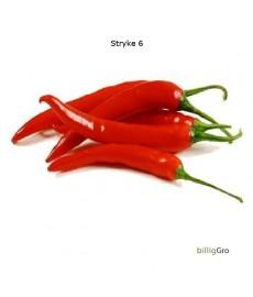 """Chili frø """"Cayenne Thick"""""""