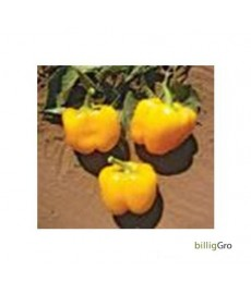 """""""Golden Cal Wonder"""" Peberfrugt frø"""