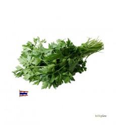 Thailandsk pasille Økologisk