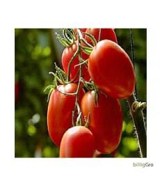 """Rio Grande"" blomme tomat"