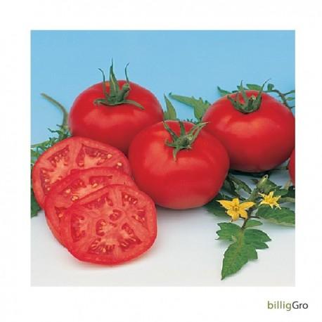 """Moskvich"" (Almindelig tomat) XXX"