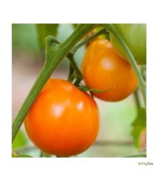 """""""Valencia"""" Tomat"""