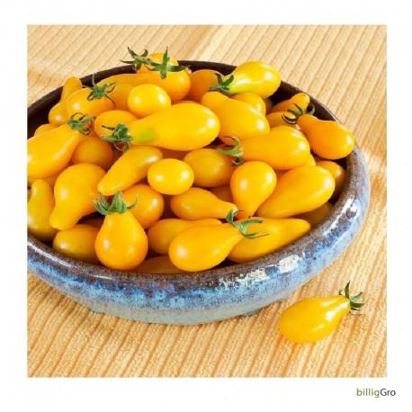 """Yellow Pear/ Cherry Bell"" (Cherrytomat)"