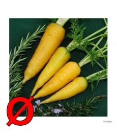 """solar yellow"" Økologisk gulerod"