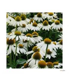 Hvid sommerhat
