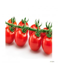 """dulcita tomater F1"" rød cocktail tomat"