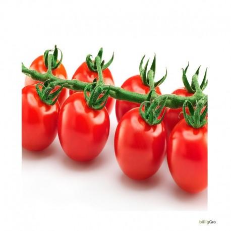 "jasmin tomat "" stor rød cocktail tomat"