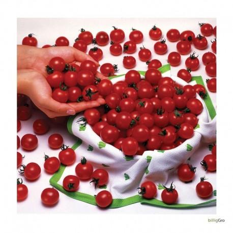 Royal tomat Rød x