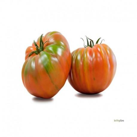 """Raf tomato""Lille Bøf tomat"