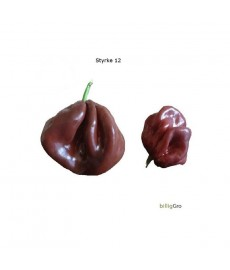 "Chili frø ""7 Pot Chokolade"" XXX"