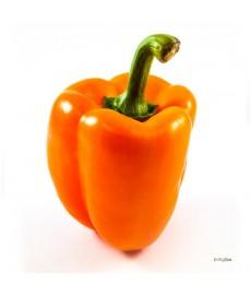 Orange_Sun_peberfrugt_frø