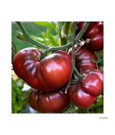 """""""Black Russian"""" Stor almindelig / Bøf tomat"""
