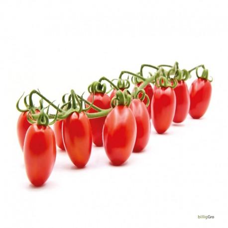 """Datterino"" Lille blomme tomat"