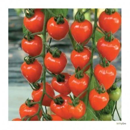 """Jordbær tomat """"Berry Garden"""" Cherry-tomat"""