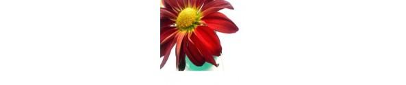 Blomster Frø