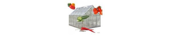 Frø pakke Med tomat frø