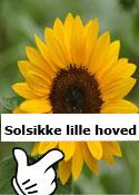 solsikke lille hovede