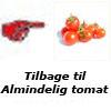 Tomatfrø-almindelig tomat