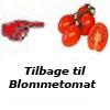 Tomatfrø-blommetomat