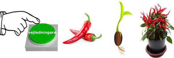 Så vejleding chili frø. + Pasning chili planter